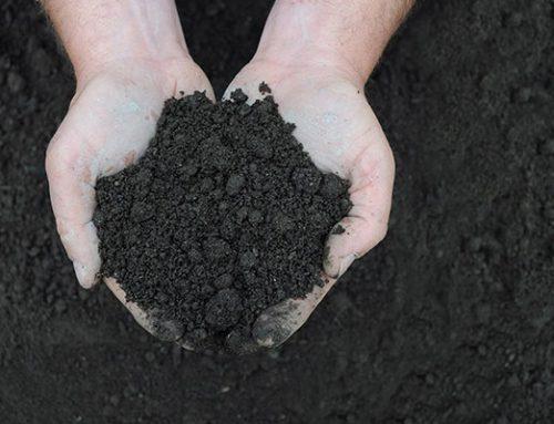 Comment choisir le bon terreau pour votre projet de jardinage?