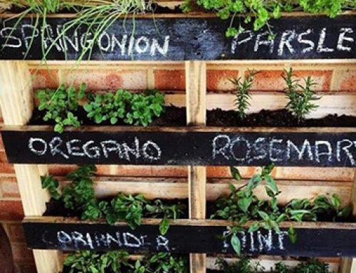 Construire un jardin de fines herbes vertical avec des palettes de bois usagé